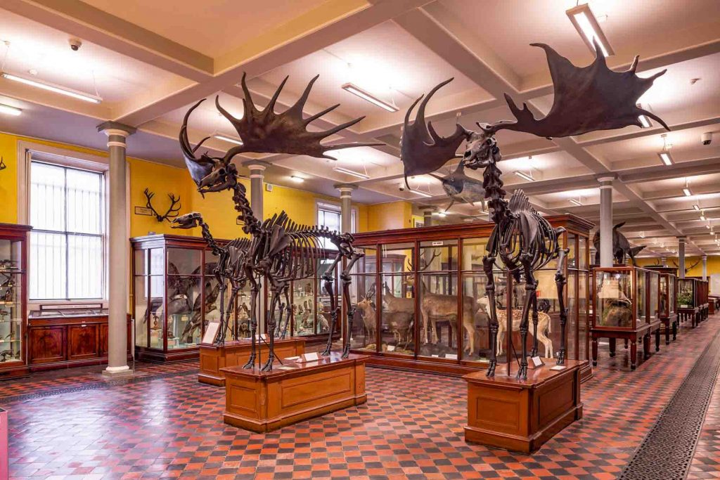 National Museum of Ireland - Natural History Museum